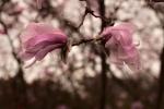 2021-03-16-IMGP6836-pah-fleur-r.jpg