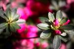 Jardin_PierreJ__2-r.jpg