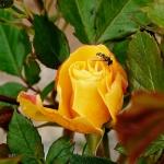 ProxiPhoto_jardin_JFC-6-r.jpg
